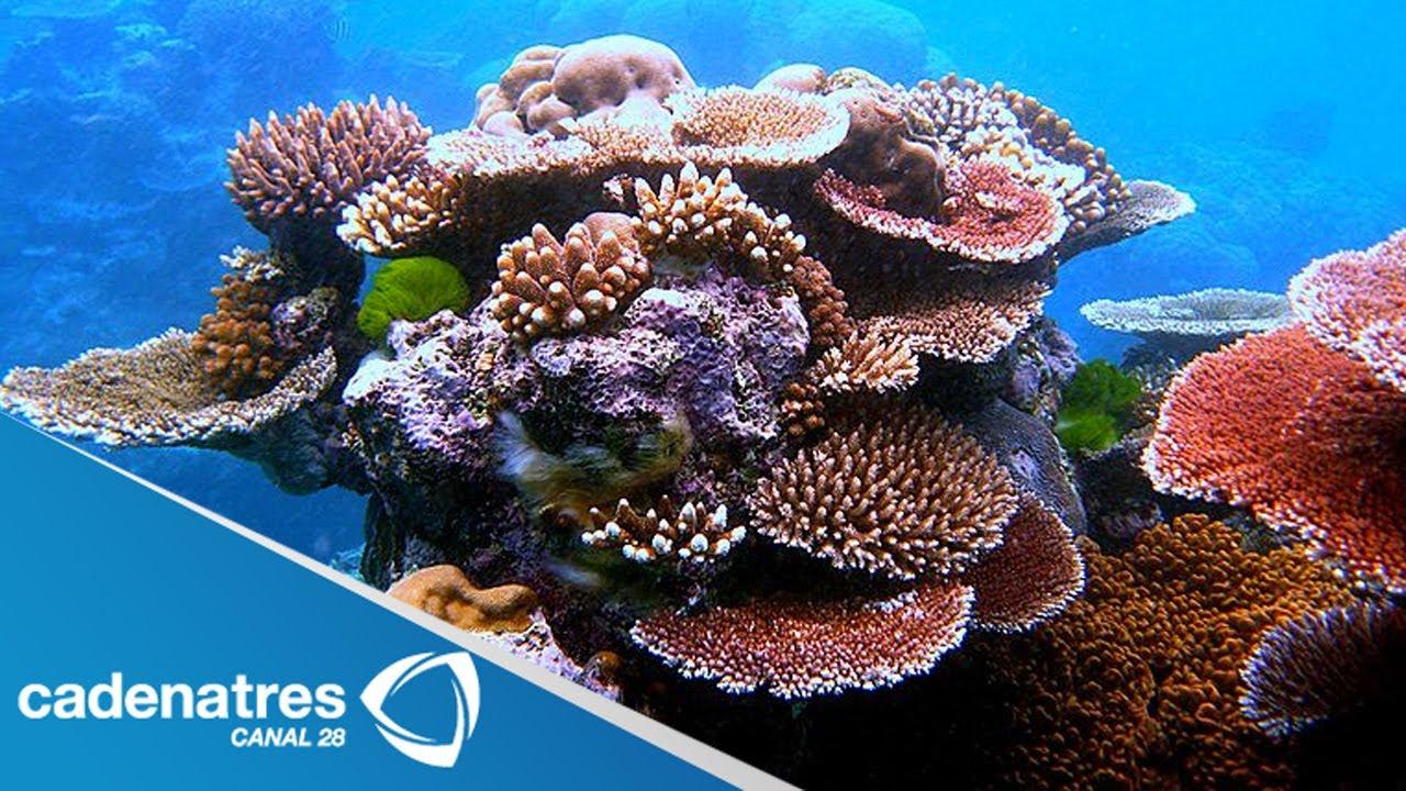 Impresionantes Imágenes Del Mundo De Los Corales De Australia Youtube