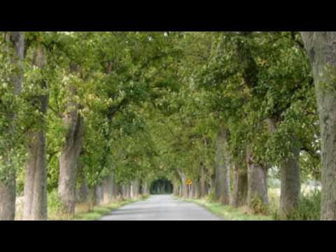 Piosenki dla dzieci - Baśniowa Kapela - Kaj łowiecki moje?из YouTube · Длительность: 2 мин49 с