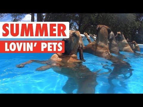 Summer Lovin' Pets Funny Pet Video Compilation 2017