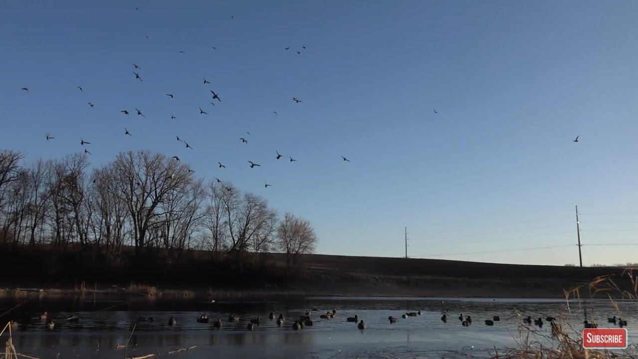 Minnesota Duck Hunting- Sun Shine Mallards (Day 60)