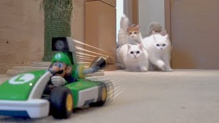 I bought Super Mario Kart for my cats and they went wild! (ENG SUB)