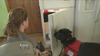 My Pet: Teaching Dogs To Open Refrigerator
