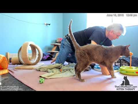 Guardian Kittens - Afternoon Dorian Visit 2018-06-19