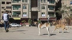 Kairo warnt: Vorsicht, tollwütiger Hund!