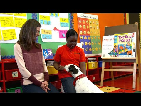 Comfort dogs in NYC schools transform learning experience