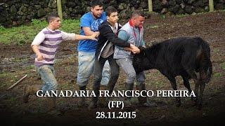 Baixar GANADARIA FRANCISCO PEREIRA (FP)   28-11-2015  TRABALHO DE CAMPO - TERCEIRA-AÇORES