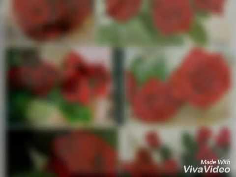 صور ورد احمر و ابيض رومنسي روعة Youtube
