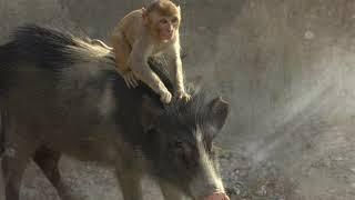 Людей Бог превратил в свиней и обезьян