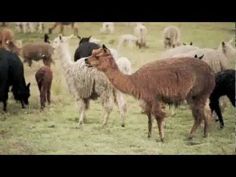 The Peru Chronicles: The Story Of Alpacas And Sustainable Farming From EILEEN FISHER