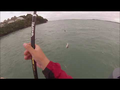 NZ Basic Fishing | Wharf fishing in Auckland