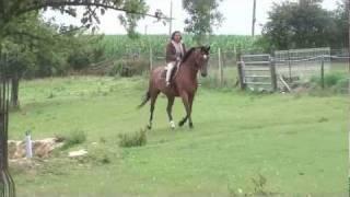 Quathar du Temple, cheval à vendre.