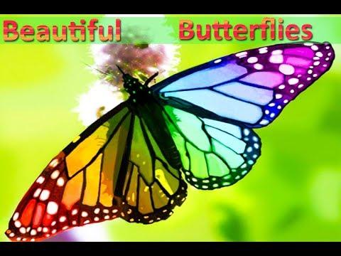 10 Beautiful Butterflies And Usual Butterflies | Video