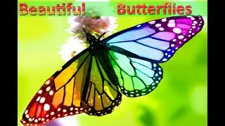 10 Beautiful Butterflies And Usual Butterflies | Video