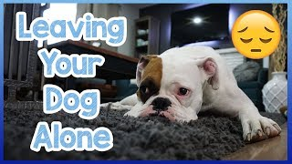 How to Leave Your Dog Home Alone! Leaving Your Dog Alone + PETCUBE GIVEAWAY!