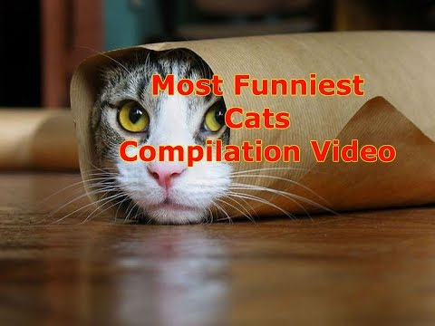 Try Not To Laugh OR GRIN Challenge - Funny Cat Vines Compilation 2017 - You Haven't seen this before