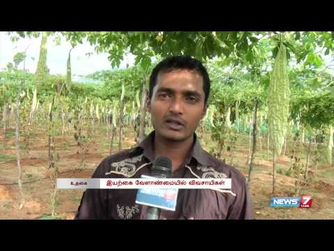 Ooty farmers resort to organic farming to grow bitter gourd | Tamil Nadu | News7 Tamil |
