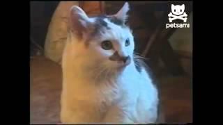 Кот пьет молока изо рта хозяйки  .flv
