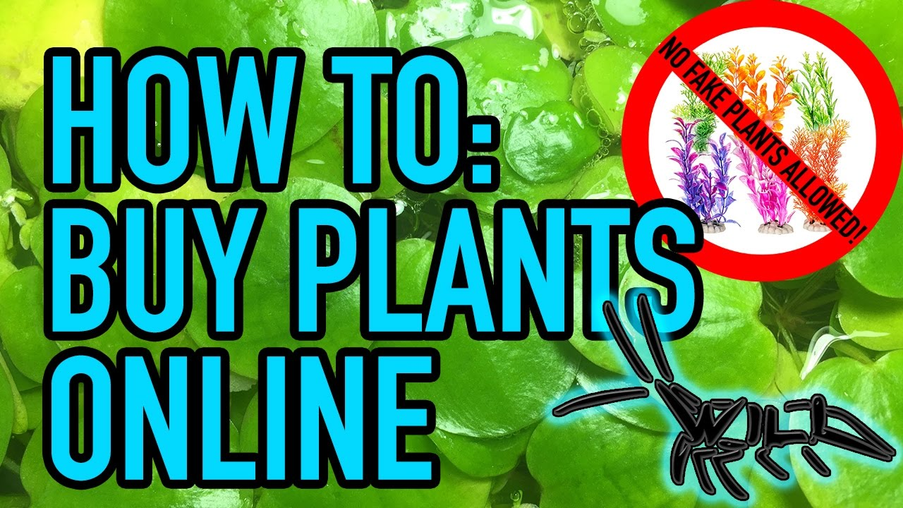 How To Aquarium Plants Online Us Aquatic Vendors Finally Fish Friday 001