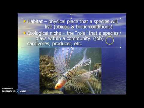 Marine Ecology Part 1