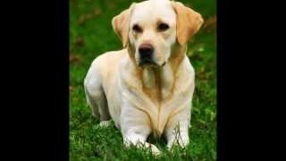 guess the dog breed