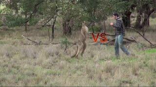 Мужик , вступился за собаку, кенгуру VS человек ?!