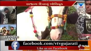 Sakab horse best horse riding