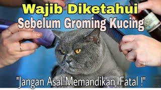 10 Hal yang Wajib Kamu Tahu Sebelum Grooming. (Cara Memandikan Kucing)