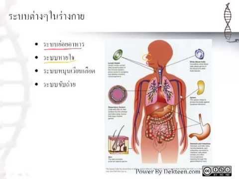 เรียนวิทย์ออนไลน์ ระบบต่างๆในร่างกาย