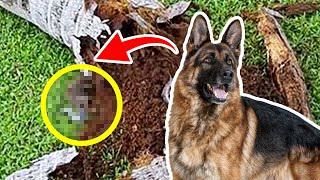Ex-Police Dog Keeps Barking At Tree, Dad Finds A Lot More Than Wood Inside