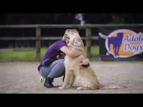Bella - Golden Retriever - 3 Weeks Residential Dog Training