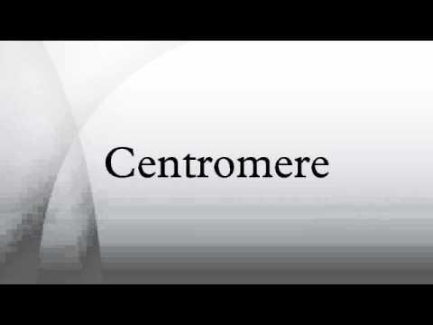 Centromere