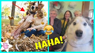 Funny Photos Of Dogs Ruining Photos