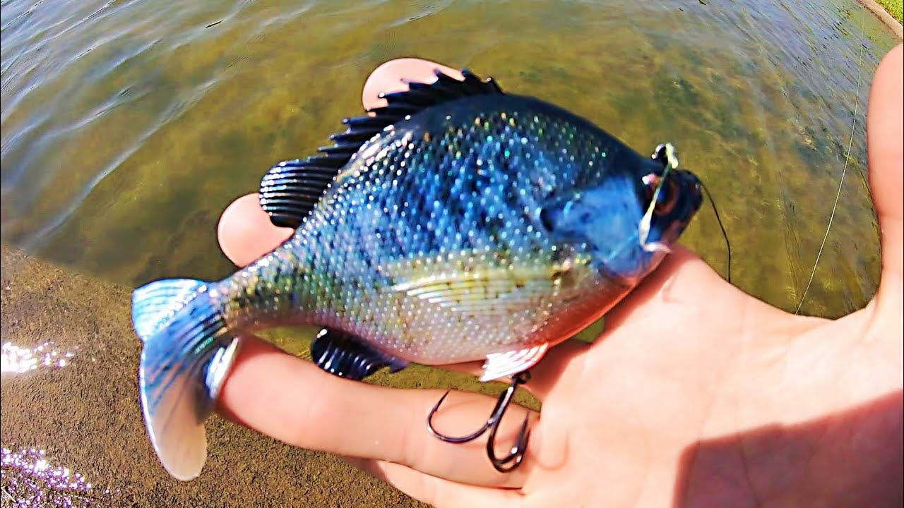 BLUEGILL SWIMBAIT gets DESTROYED BY POND MONSTER!!! (EPIC)