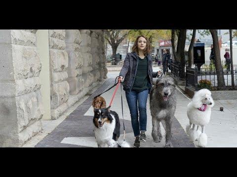 Egy kutya négy útja - Szinkronos előzetes (6E) letöltés