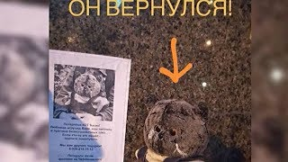 Плюшевый кот Басик, пропавший в Новороссийске, нашелся