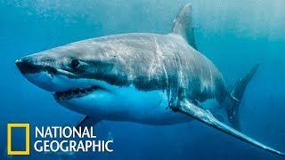 Акулоград | Документальный фильм про акул