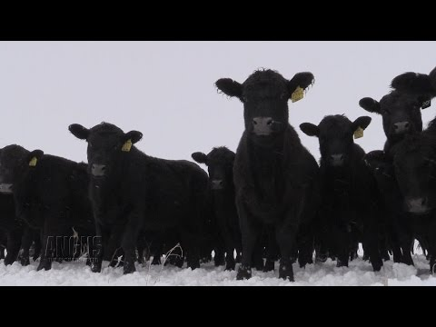 The Angus Report, Jan. 30, 2017: Top News