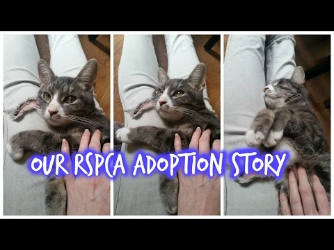 Our RSPCA Adoption Story – Kit the Cat
