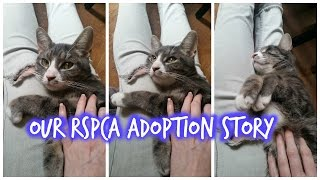 Our RSPCA Adoption Story  Kit the Cat