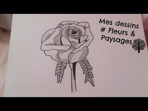 Mes dessins fleurs nature morte paysages youtube - Dessin de nature morte ...