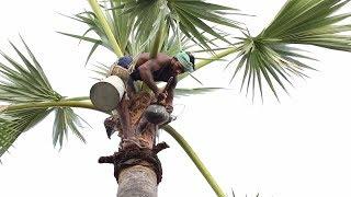 20 வருடமாக சுத்தமான பதநீர் விற்கும் இயற்கை மனிதர் - சிலிர்க்க வைக்கும் நேரடி இயற்கை காட்சிகள்