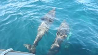 видео Обитатели Черного моря: кто они?
