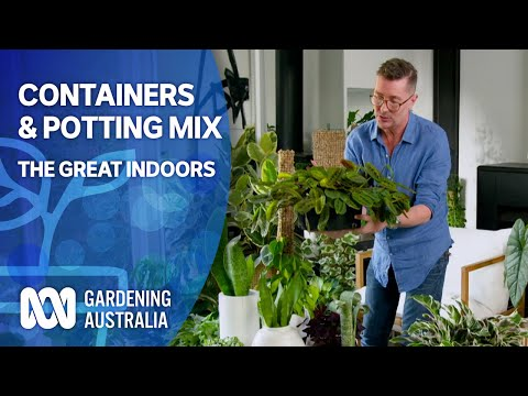 Containers & Potting Mix    Indoor Plants And Balcony Gardens   Gardening Australia