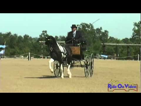 16D Dean Lacey Dressage WSS Vineyard Classic CDE May 2011