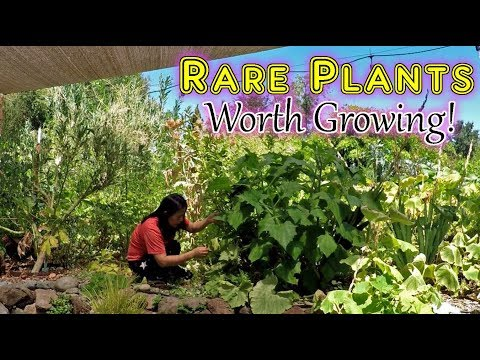 Growing Rare Uncommon Plants You Can't Find At Market