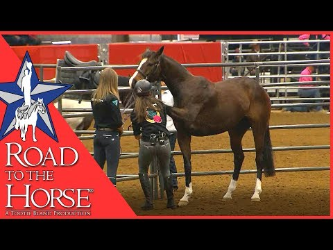 Road to the Horse 2017 - Extra Footage - Vicki Wilson Clinic