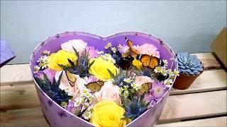 Живые бабочки в коробке с цветами