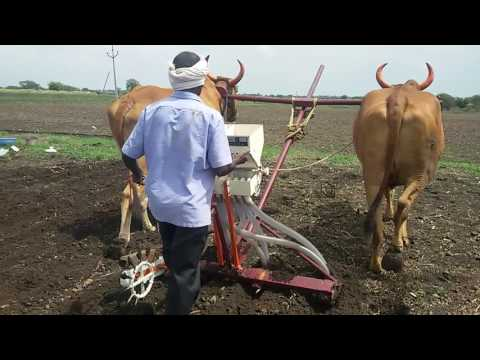 Seed drill on ox