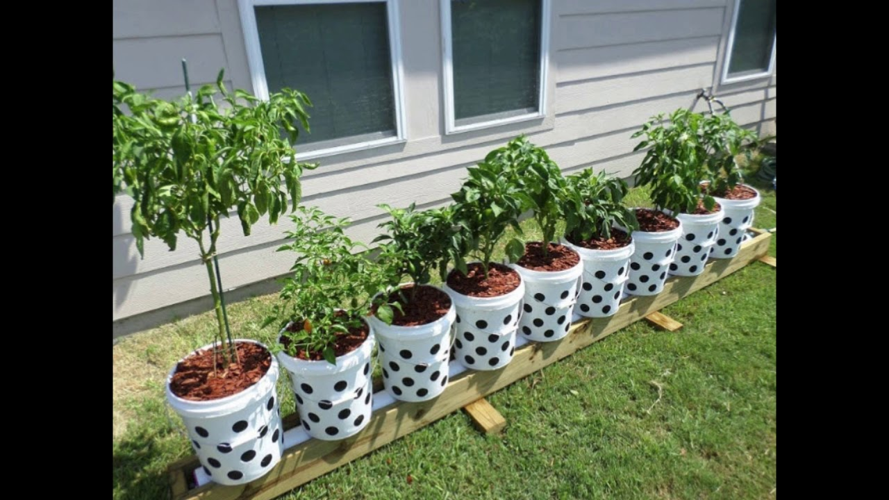 The Evolution Of The Rain Gutter Grow System Huge