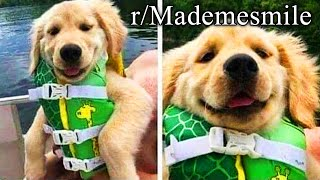 "r/Mademesmile | click to instantly say ""awww"""